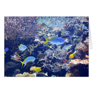 Underwater Sea Fish Scene Cards