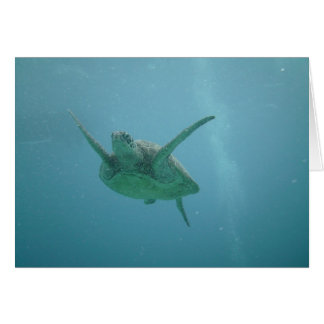 Underwater Sea Turtle Card