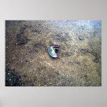 Underwater Snail Poster