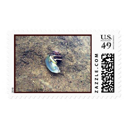 Underwater Snail Stamp