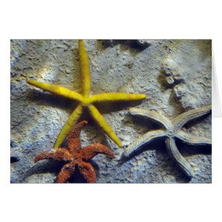 Underwater Starfish Card