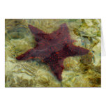 Underwater Starfish Tropical Animal Photography Card