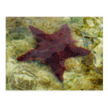 Underwater Starfish Tropical Animal Photography Postcard