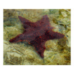 Underwater Starfish Tropical Animal Photography Poster