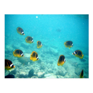 Underwater Tropical Fish Postcard