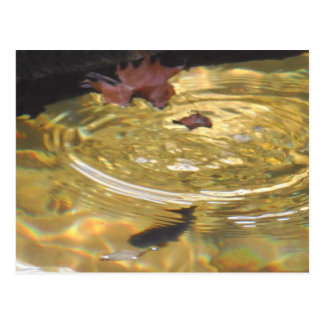 Underwater Trout feeding in Smoky Mountain creek Postcard