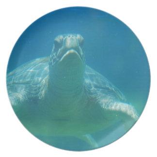Underwater Turtle Plate