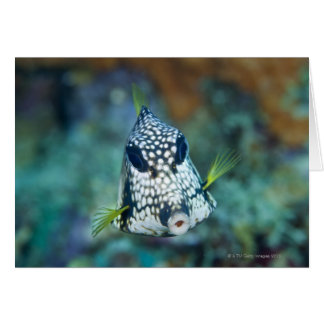 Underwater view of Smooth Trunkfish (Lactophrys Greeting Card