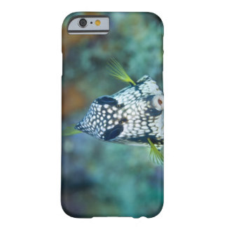 Underwater view of Smooth Trunkfish (Lactophrys Barely There iPhone 6 Case