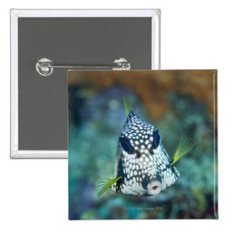 Underwater view of Smooth Trunkfish (Lactophrys Pinback Button