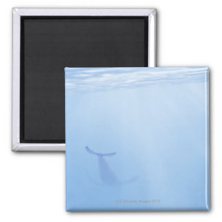 Underwater view of whale 2 inch square magnet