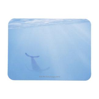 Underwater view of whale vinyl magnet