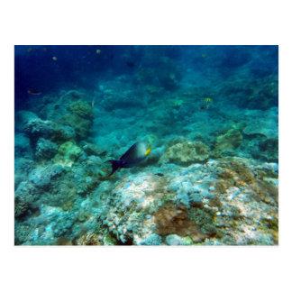 Underwater View Postcard