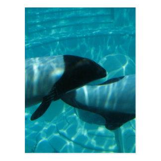Underwater Whales Postcard