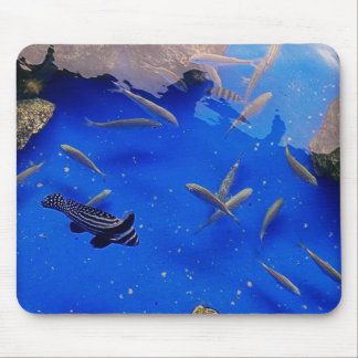Underwater world clown fish swimming in the sea mouse pad