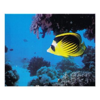 Underwater world of the Red Sea Poster
