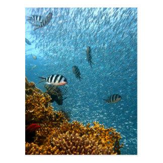 Underwater world postcard