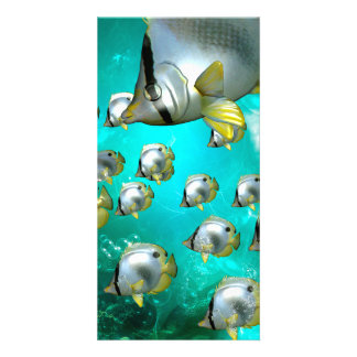 Underwater world, Wonderful butterflyfish Card