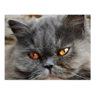 Undisturbed cat postcard