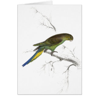 Undulated Parrakeet by Edward Lear) Greeting Card