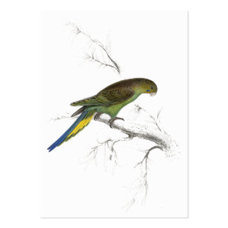 Undulated Parrakeet by Edward Lear Large Business Card