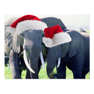 Unforgettable Elephant Christmas Postcard