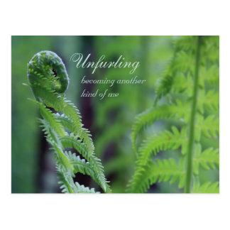 Unfurling fern leaf CC0191 Nature close-up photo Postcard
