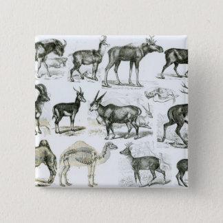 Ungalata or Hoofed Animals Pinback Button
