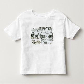 Ungalata or Hoofed Animals Toddler T-shirt