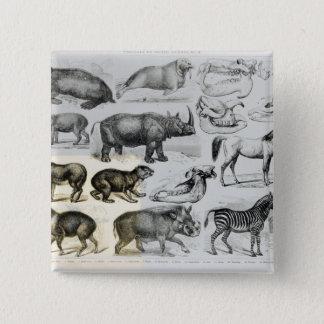 Ungulata or Hoofed Animals Button