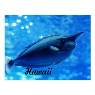 Unicorn Fish Postcard