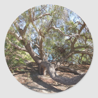 Unidentified Tree on the California Coast Classic Round Sticker