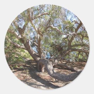 Unidentified Tree on the California Coast Classic Round Sticker
