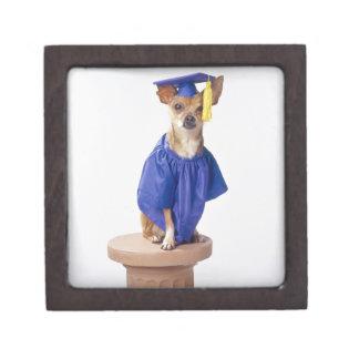 Uniforme de la graduación del perro de la chihuahu cajas de regalo de calidad