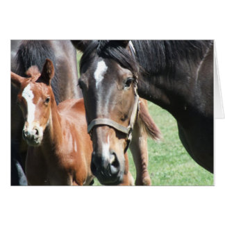 Unique and Charming Mare with Her Foal Photo Card