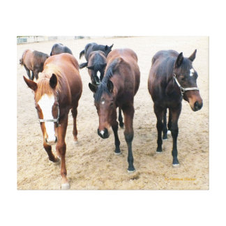 Unique and Charming Thoroughbred Colts Canvas Print