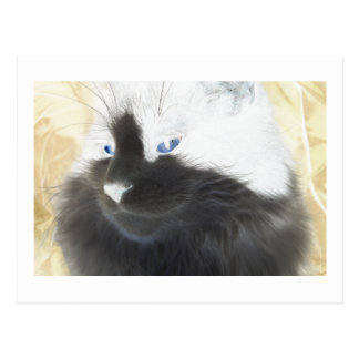 Unique Black and white Cat Postcard