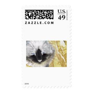 Unique Black and White Cat Stamps