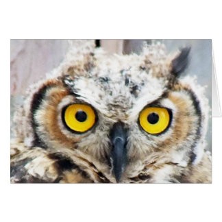 Unique Great Horned Owl Photo Design Card