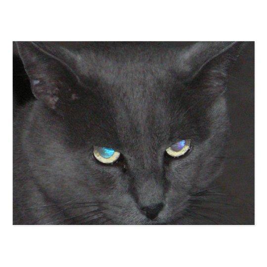 Unique Grey Cat w/ Colored Eyes Postcard
