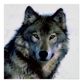Unique Motivational Freedom Wolf Poster