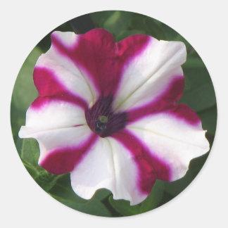 Unique Petunia Classic Round Sticker