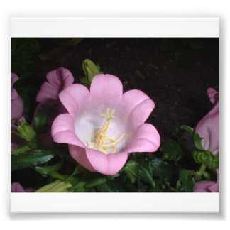 Unique Pink Flower with Six Petals Photo