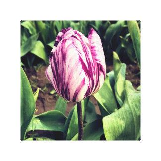 Unique Purple & White Stripe Tulip Canvas Print