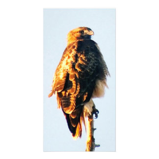 Unique Red-Tailed Hawk  Custom Photo Card