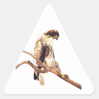 Unique Red-Tailed Hawk Photo Custom Triangle Sticker