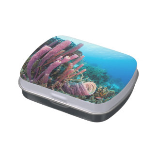 Unique underwater world coral reefs jelly belly tins