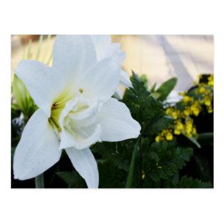 Unique White Flower Postcard