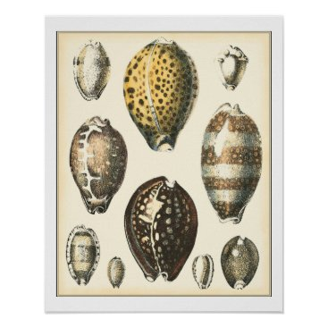 Beach Themed Uniquely Shaped Seashells Poster
