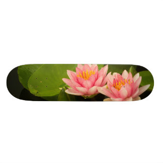 United States, DC, Washington, Kenilworth 4 Skateboard